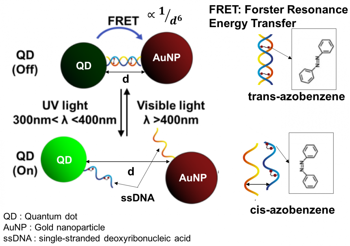 QD-DNA-AuNP conjugate reversible photoswitching mechanism