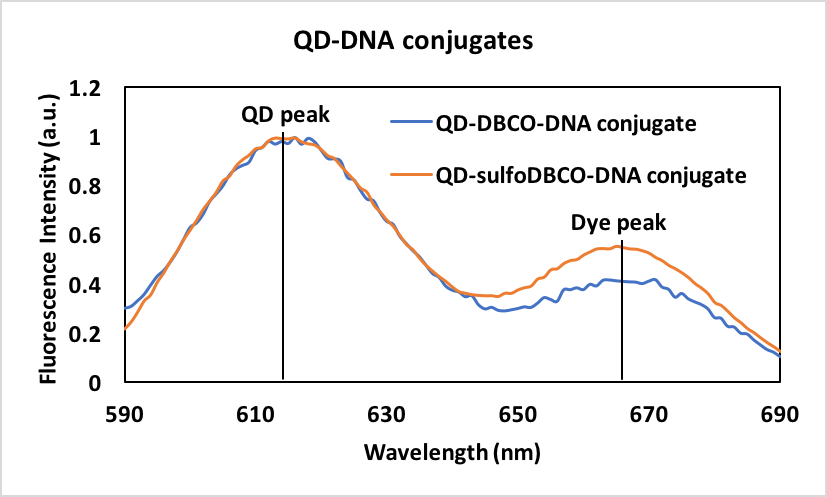 100 (Equivalent QD peaks indicate the same concentration of QDs, while the increase in the dye peak for the sDBCO conjugates indicates an increase in the amount of DNA conjugated per particle)