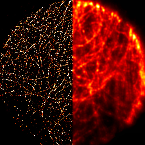 A widefield optical microscopy image (left) compared to a two-color QSTORM image (right), of a network of microtubules inside a cell. (Kner Lab)